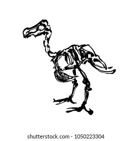 The skeleton of extinct Dodo bird. Quickly ink sketch. Fast drawing. Graphic vintage illustration.