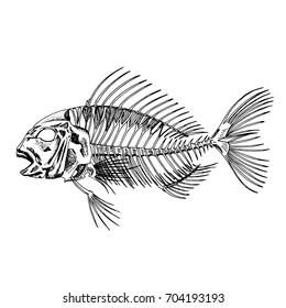 skeleton of fish. sketch
