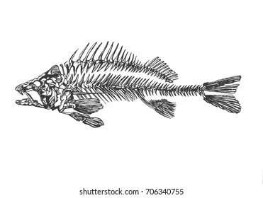 Skeleton of fish sketch vector
