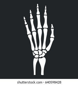 Skeleton hand with bones. Vector illustration.