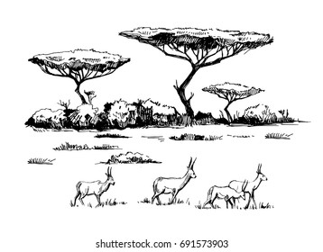 Sketch of the African savanna with antilopes and trees. Hand drawn illustrtion converted to vector.