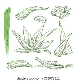 Sketch of aloe vera elements. Vector silhouettes of botanical plant. Realistic icons set use for a logo, label creation, cosmetic products advertesment or for a banner, poster design.