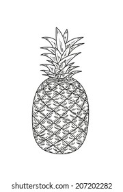 sketch of the ananas with leaves, vector, isolated