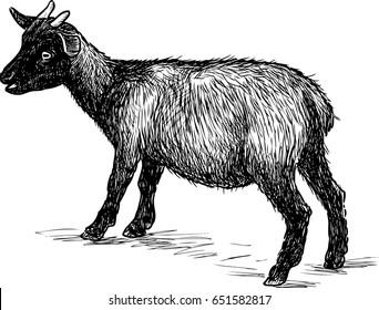 Goat Sketch Images, Stock Photos & Vectors | Shutterstock