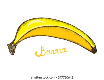 Sketch of banana. Vector illustration.