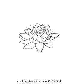 Dessin Lotus Images Stock Photos Vectors Shutterstock