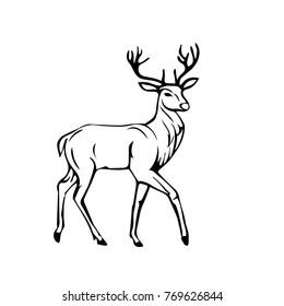 sketch of Beautiful noble proud deer .Monochrome Vector illustration.