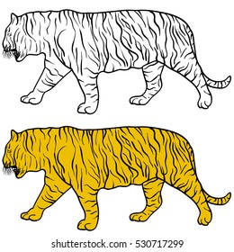 Sketch beautiful tiger on a white background. Vector illustration