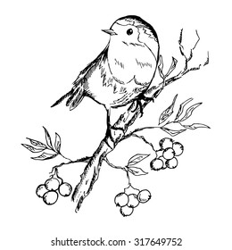 Sketch of bird sitting on a branch with berries. Vector illustration eps8