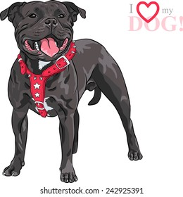 Sketch of the black dog Staffordshire Bull Terrier breed in red pinch collar