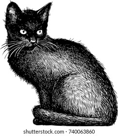 sketch of a black kitten