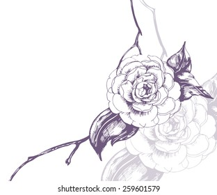 Sketch blooming Camellia sprigs. Element for your design. Vector illustration