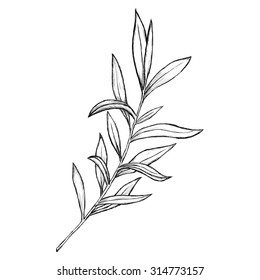 Sketch branch of leaves by hand on an isolated background