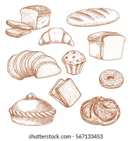 Sketch of bread and pastry food. Loaf of sliced anadama and french baguette, cereal bakery, bagel or donut, bun, kifle and croissant. Bakehouse, shop or store, cooking and crop theme.