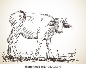 Sketch of buffalo, Hand drawn illustration
