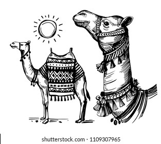 Sketch of camel. Hand drawn illustration converted to vector