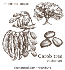 Sketch of a carob tree vintage style. Botanical drawing. Design elements for postcards, ads, promotional invitations, vegan markets and vegetarian cafe.