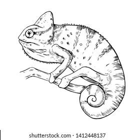 Sketch of chameleon. Hand drawn vector illustration.