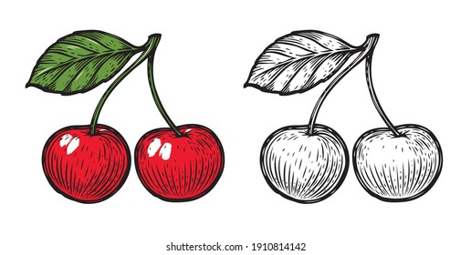 Sketch of cherry. Fruit vector isolated on white background