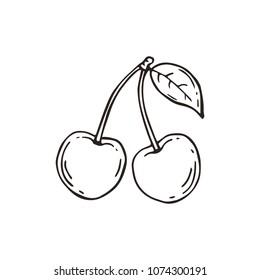 Sketch of cherry. Vector illustration.