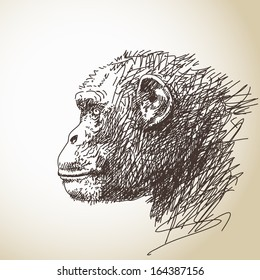 Sketch of chimpanzee head Vector illustration