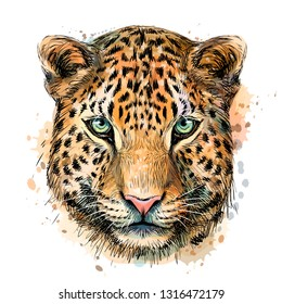 Sketch color portrait of Jaguar looking forward on a white background with splashes of watercolor.