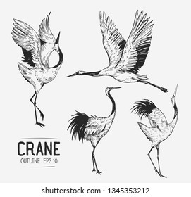 Sketch of crane. Hand drawn illustration converted to vector