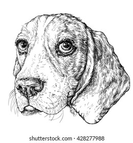 Sketch of cute Beagle Dog. Vector Illustration
