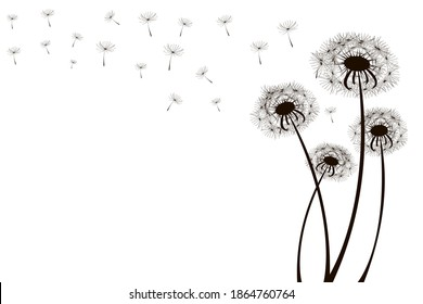 Sketch dandelions. Nature illustration. White background. Black and white illustration of flowers. Stock image.