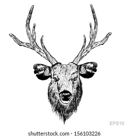 Sketch deer head on the white background