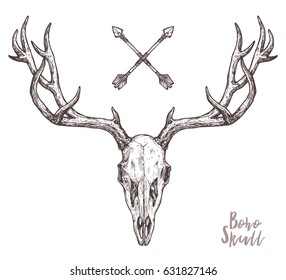 Sketch Of Deer Skull With Tribal Arrows. Boho Hand Drawn Illustration