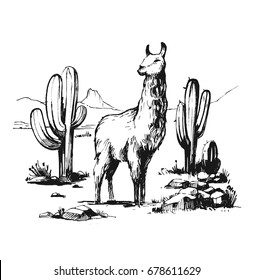 Sketch of the desert of South America with lama and cacti. Prairie landscape. Hand drawn vector illustration