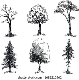 Sketch of different trees types
