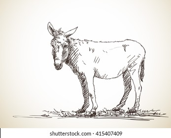 Sketch of donkey Hand drawn illustration