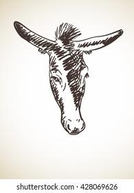 Sketch of donkey's head, Hand drawn illustration