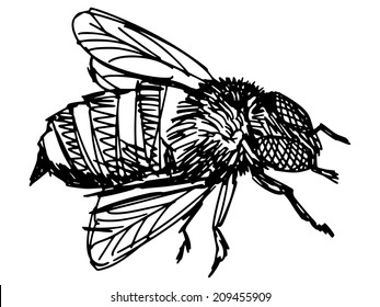 sketch, doodle, hand drawn illustration of bee