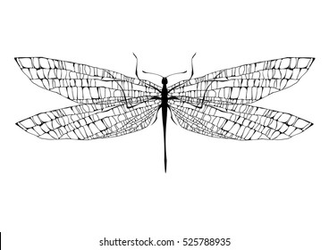 Sketch of dragon-fly. Image of insect on a white background.Vector illustration.