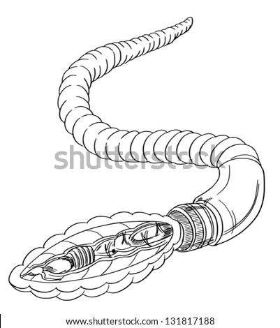 Sketch Earthworm Anatomy Stock Vector Royalty Free 131817188