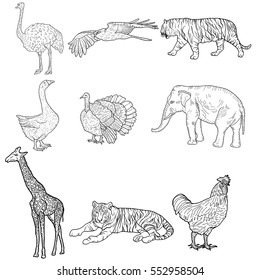 Sketch elephant tiger eagle rooster giraffe ostrich turkey goose. chicken on a white background. Vector illustration.