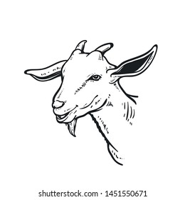 sketch of the face of a male goat, can be used for logos, mascot and background.
