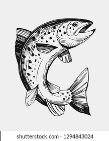 Sketch of fish. Salmon, trout. Hand drawn illustration. Vector. Isolated