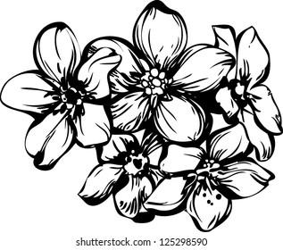 sketch five flowerets in one bouquet