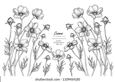 Sketch Floral Botany Collection. Cosmos flower drawings. Black and white with line art on white backgrounds. Hand Drawn Botanical Illustrations.