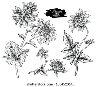 Sketch Floral Botany Collection. Dahlia flower drawings. Black and white with line art on white backgrounds. Hand Drawn Botanical Illustrations.Vector.