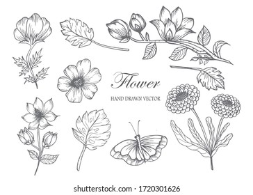 Sketch Floral Botany Collection. Flower drawings. Black and white with line art on white backgrounds. Hand Drawn Botanical Illustrations.Vector.