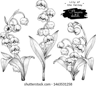 Sketch Floral Botany Collection. Lily of the valley flower drawings. Black and white with line art on white backgrounds. Hand Drawn Botanical Illustrations.Vector.