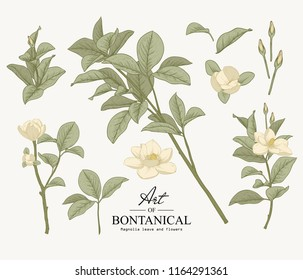 Sketch Floral Botany Collection. Magnolia leave and flower drawings. Beautiful line art. Hand Drawn Botanical Illustrations.Vector.