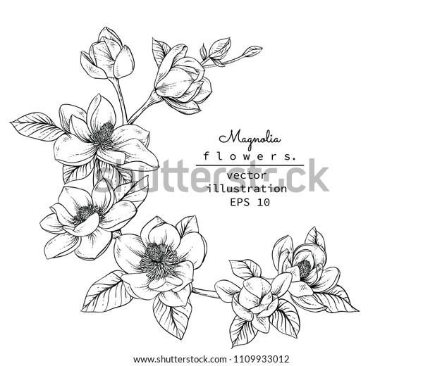 Vetor Stock De Coleção De Botânica Floral Sketch Desenhos