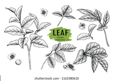 Sketch Floral Botany Collection. Peony, Rose and Magnolia Leaves drawings. Beautiful line art on white backgrounds. Hand Drawn Botanical Illustrations.Vector.