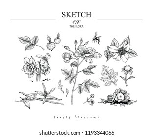 Sketch Floral Botany set. Camellia, Rose, Narcissus, Fever few, Vanilla flower and leaf drawings. Black and white with line art on white backgrounds. Hand Drawn Illustrations.Vector.Vintage styles.
